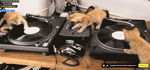 strange websites procatinator dj cats
