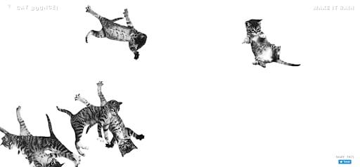 weird websites cat bounce cats